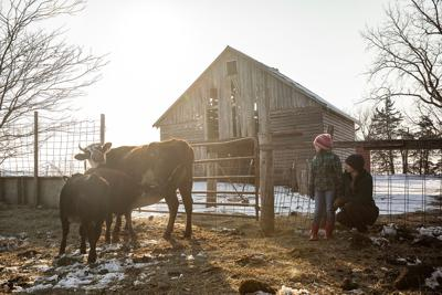 Issue no. 1: Artisan cheesemaking in central Iowa