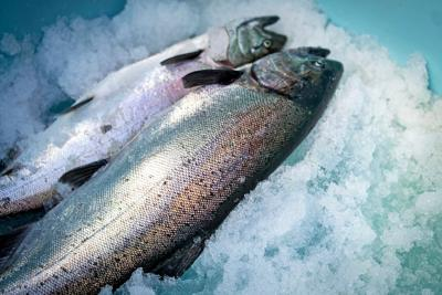 Why some of the best seafood you can buy comes frozen