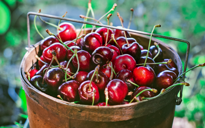 Everything you ever wanted to know about cherries