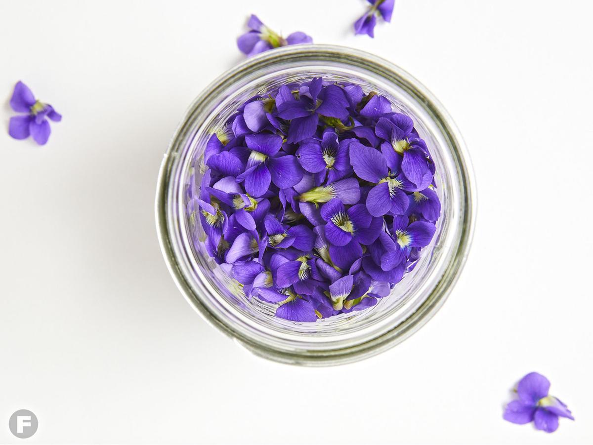 Purple Flowers of Wild Violets for Violet Syrup