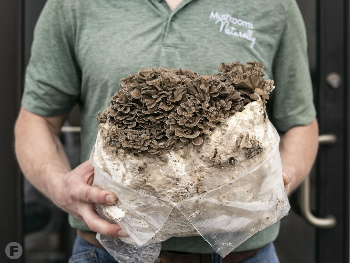 Mushrooms Naturally fresh mushrooms
