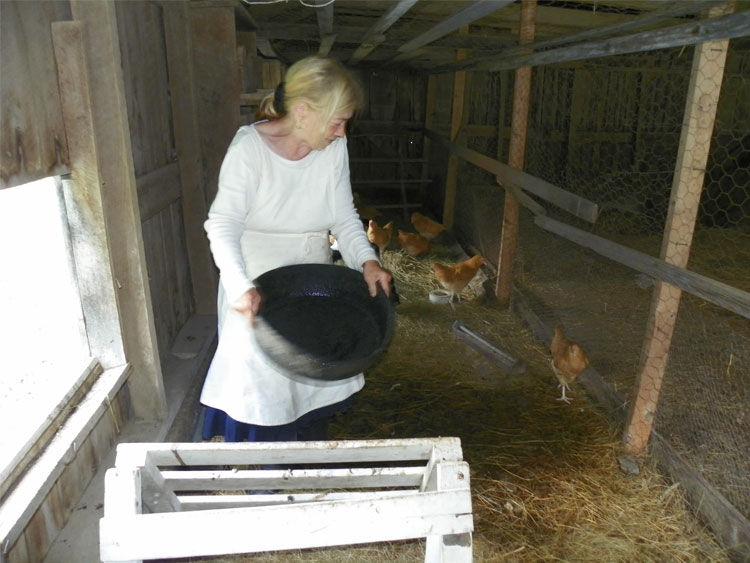 Jane Parres Chickens