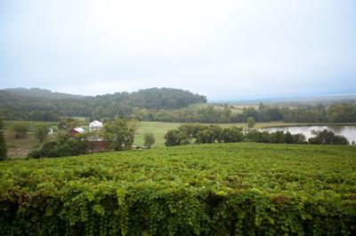 A Year at Montelle Winery