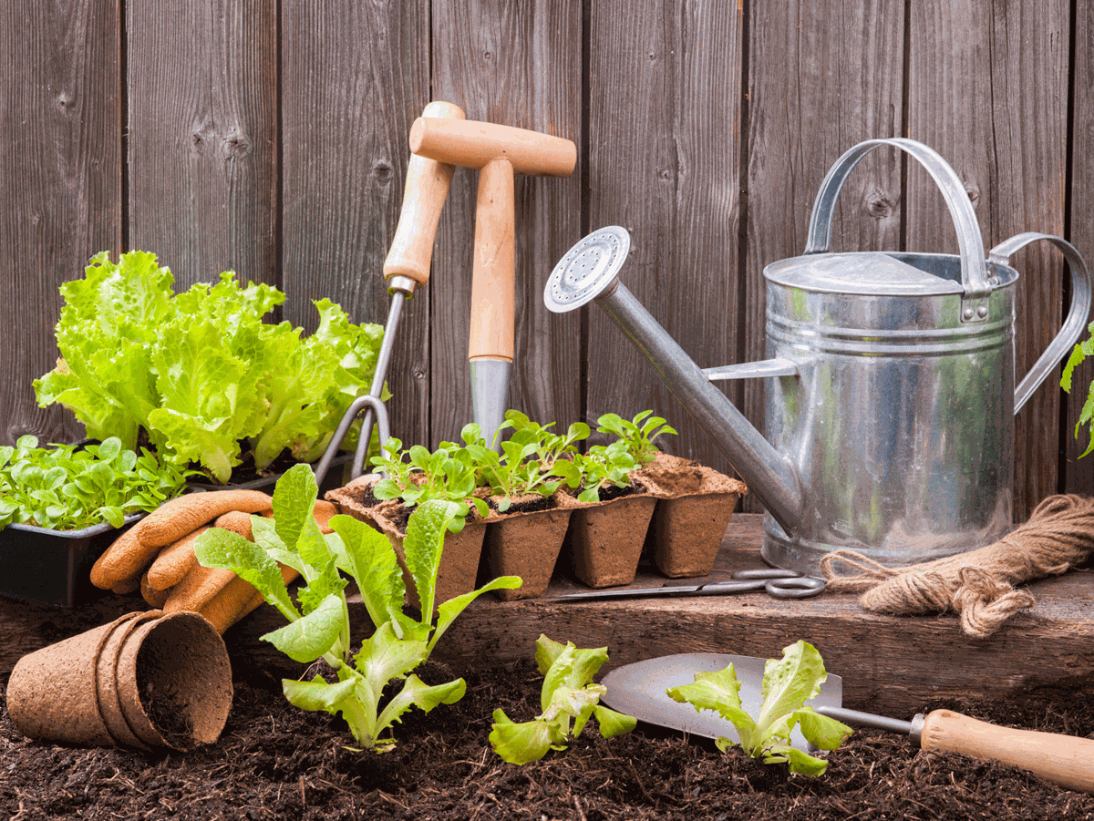 From Clippers To Trowels These Are The Essential Tools Every Home