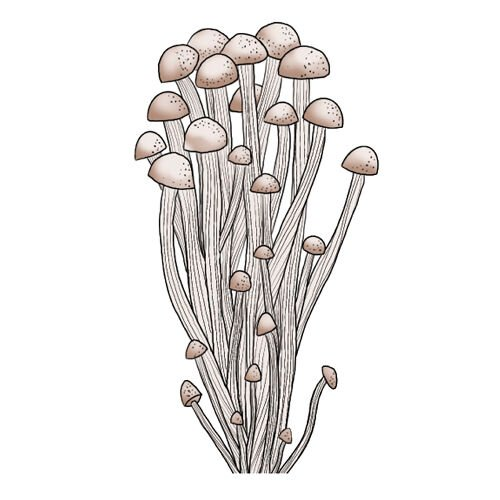 Crash Course Mushrooms Enoki