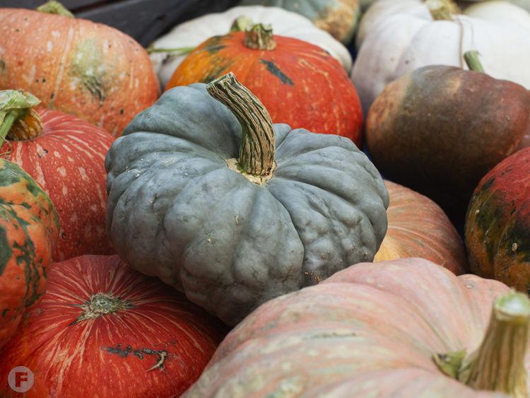 Diffey Farms Pumpkins