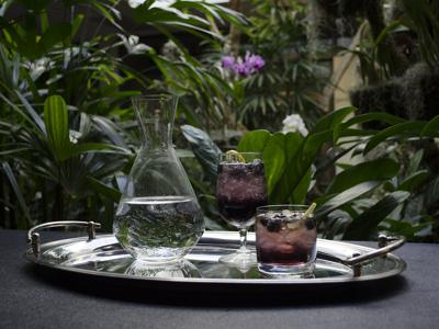 Orchid Nights at Botanical Garden