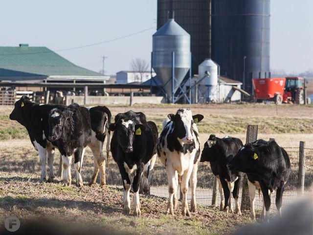 Small Dairy Farms Are Making Big Changes To Survive