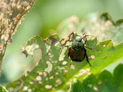 Pest Control for Your Home Garden