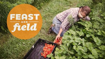 Feast and Field