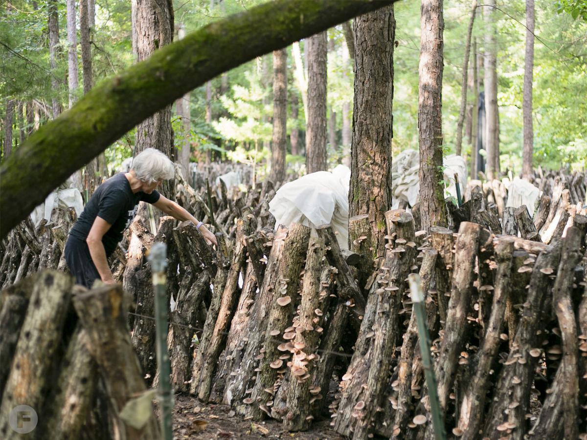 Ozark Forest Mushrooms Nicola Macpherson