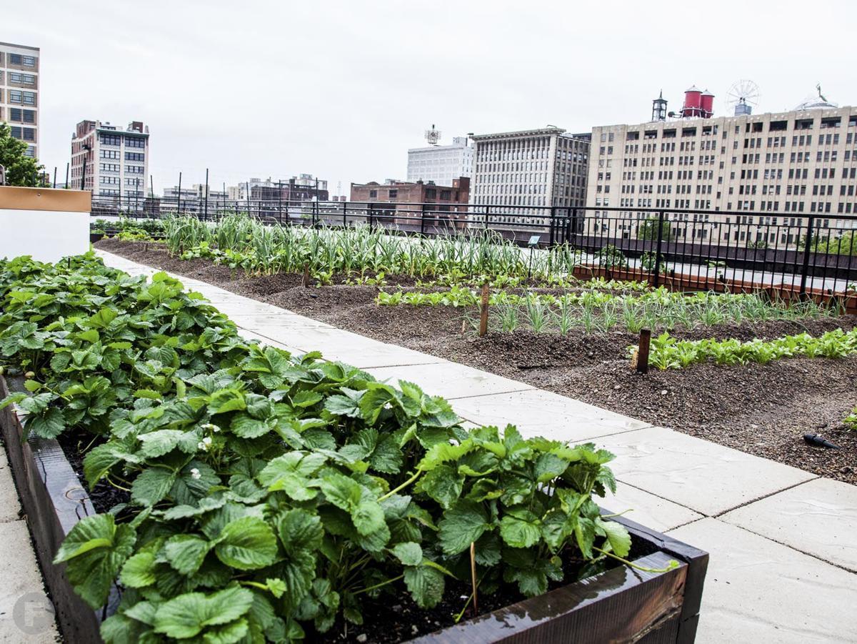 Urban Harvest STL