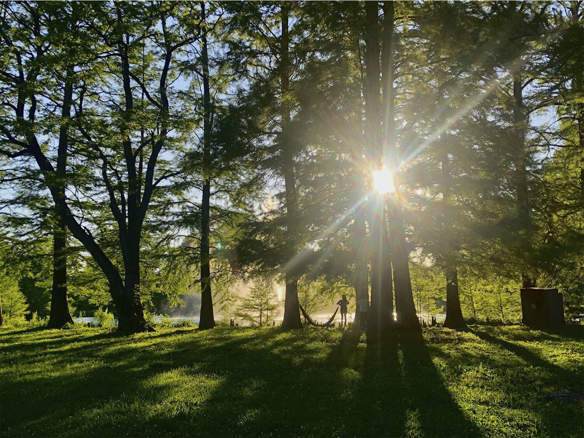 Forest Park web.jpg