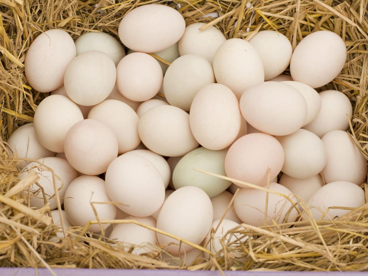 Duck Egg Roundup