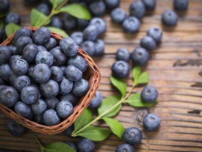 Kenney Family Farm Blueberries