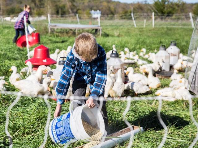 HoneyDel Farm Kids