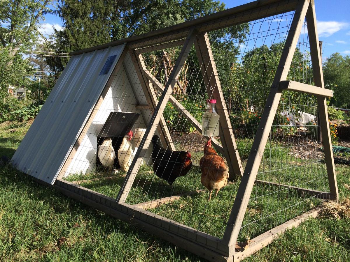 The Easy Chicken Coop