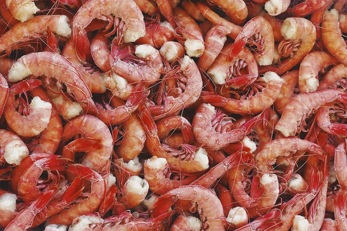 Shrimp Runner Shrimp