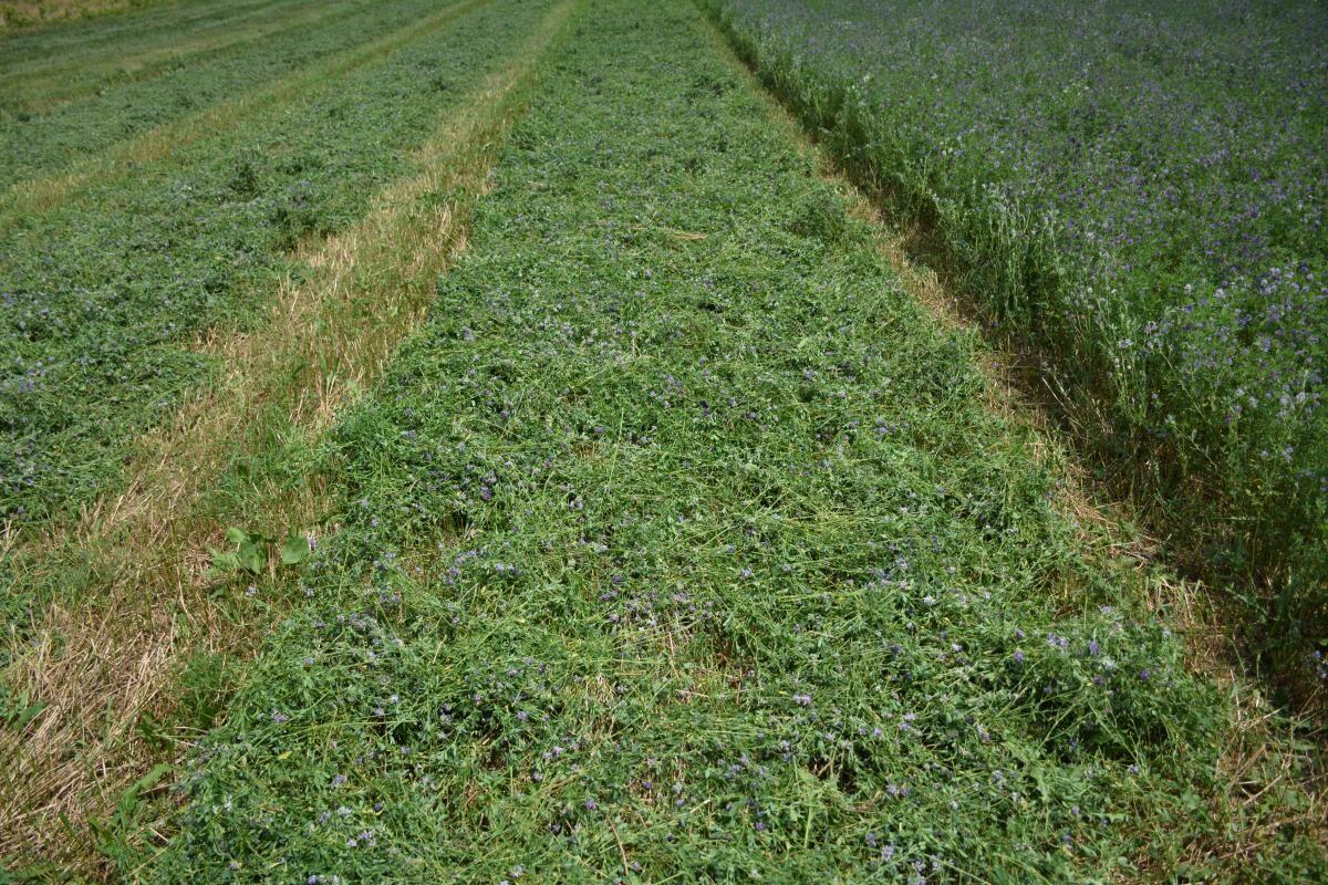 Mngment Hay Windrow