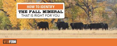 CN Fall Mineral