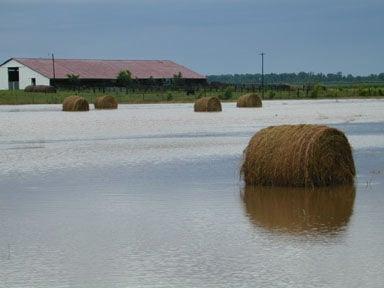 IN Hay Flooded Field