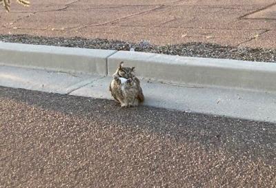 hurt owl.jpg