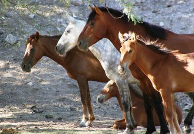 file horses.jpg