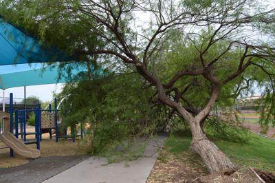 Storm GE tree.jpg