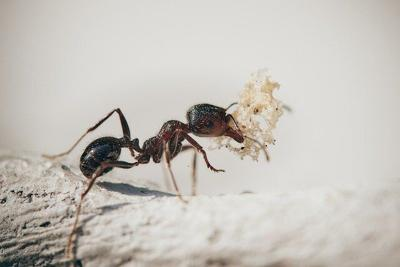 How to Properly Deal With an Ant Infestation