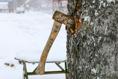 Plant Lover? 4 Important Things You Need To Know About Arboriculture