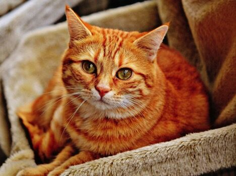 Be A Super Catmom: Popular CBD Treats For Cats