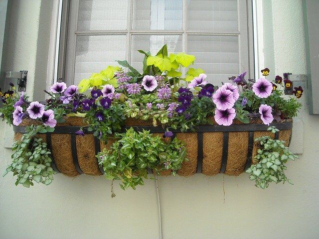 Useful Solutions to Keep Your House Pest-Free This Summer