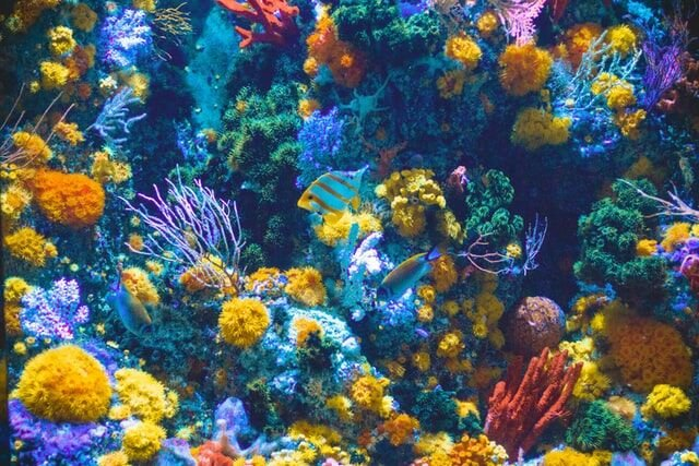 Tips for Choosing the Right Type of Fish Tank