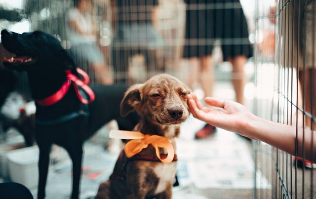 6 Ways to Keep Your Pet Healthy