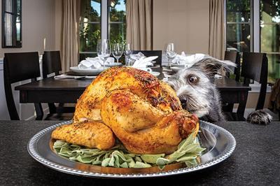 Dog Stealing Thanksgiving Turkey