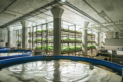 Aquaponics Farm Urban Organics Plans Expansion