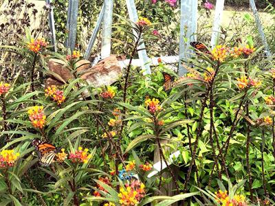 Sugar Land Memorial Park Butterfly Garden