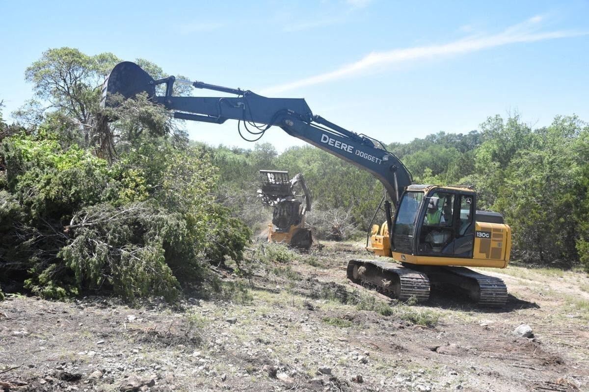 Tree removal web.jpg