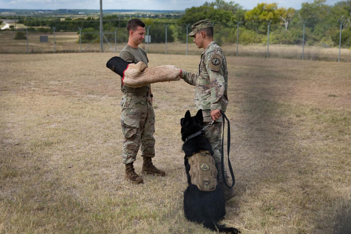 Military Dog_001_Blair Dupre web.jpg