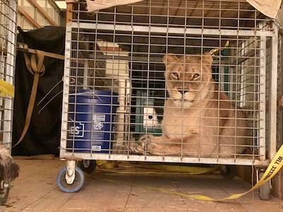Two Men and a Truck Helps Evacuate Wildcats in Oregon