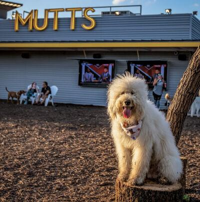 Mutts Canine Cantina digs into booming pet industry