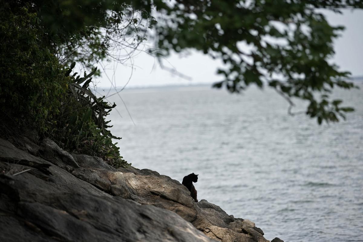 APTOPIX Brazil Cat Island