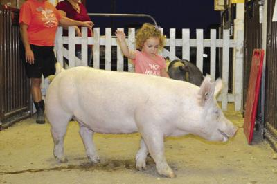 Quarantine lifted for remaining pigs at the Great Frederick Fair