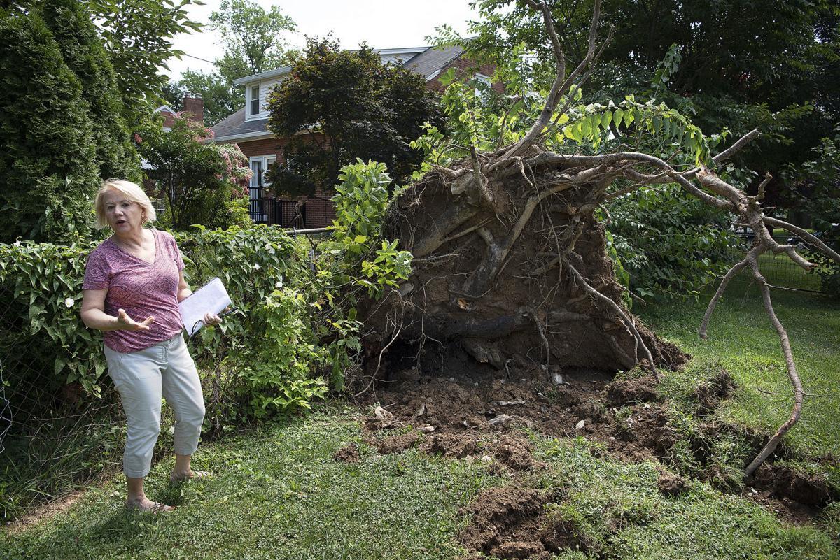 Maureen Olson storm damage 1