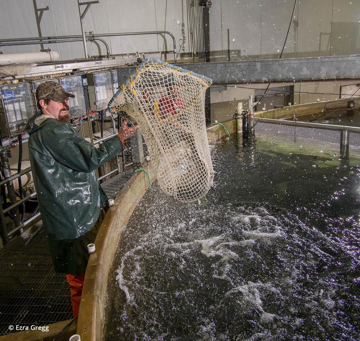 Freshwater Institute salmon 2