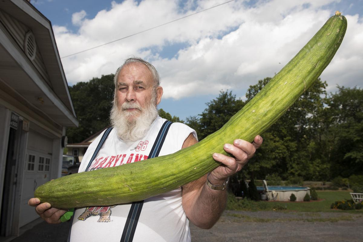 in a pickle record breaking cucumber too big to eat