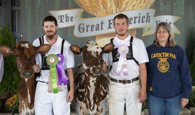 Fair Colins Cow Hubbard
