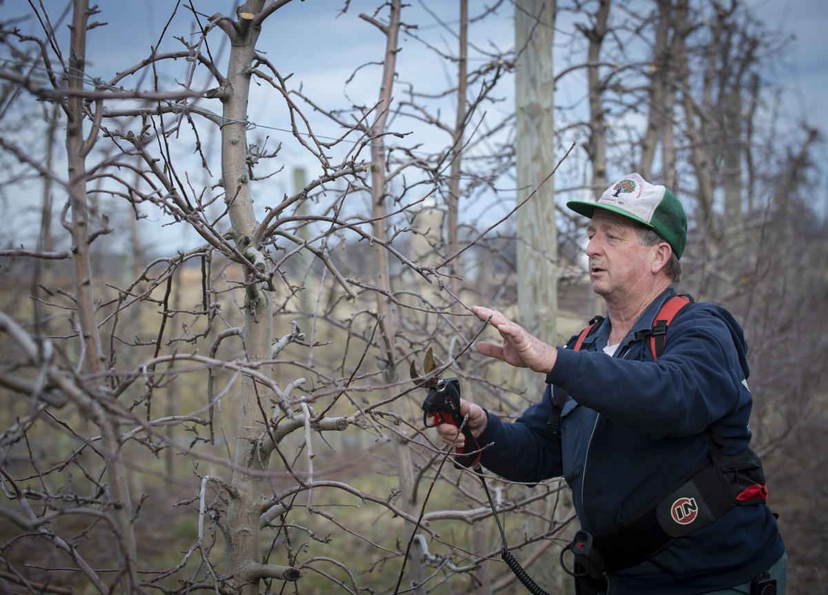 Orchard Pesticide