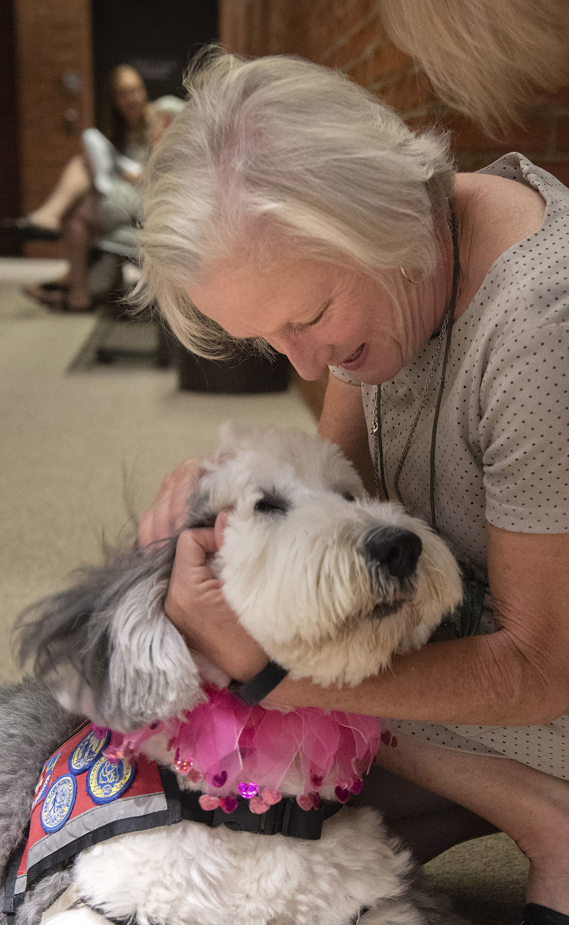 Courthouse theraphy Dogs