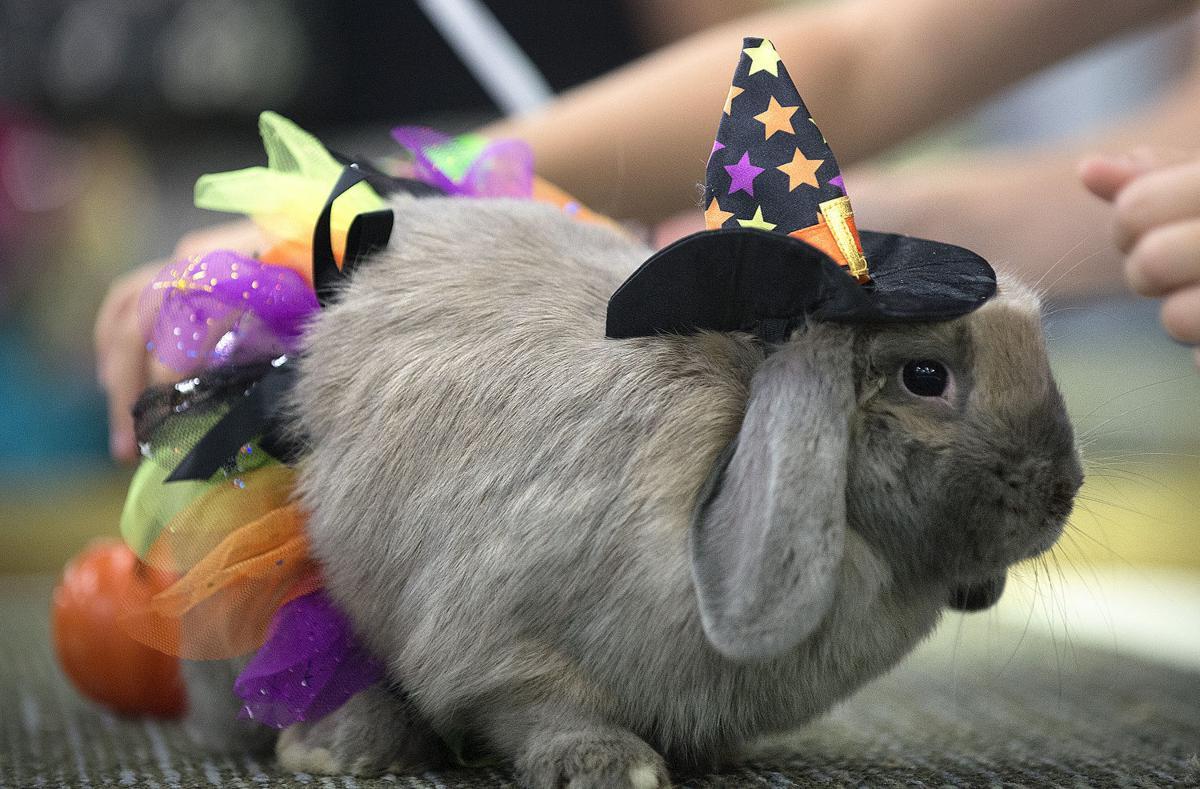 DG Decorated rabbit 1